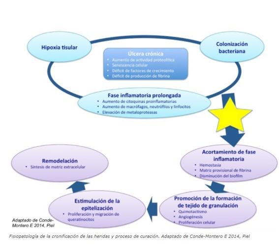 Imagen fisiopatología de la cronificación de las heridas y proceso de curación