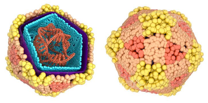 eterovirus coxsackie